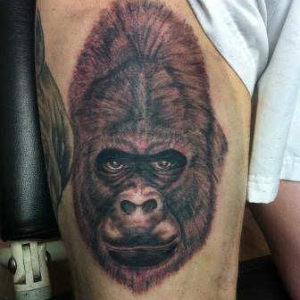 gorilla_kopf